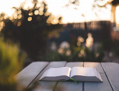 5 libros con traductores como protagonistas para este verano